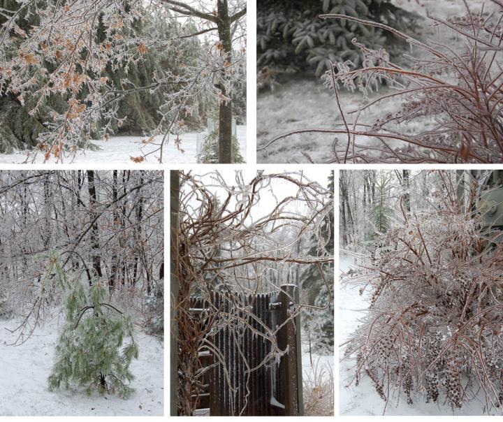 icestorm1-copy