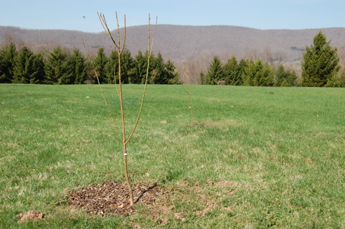 potentialorchard